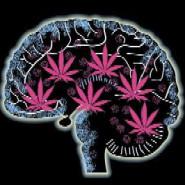 Marijuana Reality Check