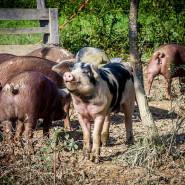 Farm Bill Represents Small Victory Over Big AG