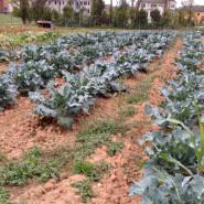 Potomac Vegetable Farms: Farm and Community in Urban Sprawl